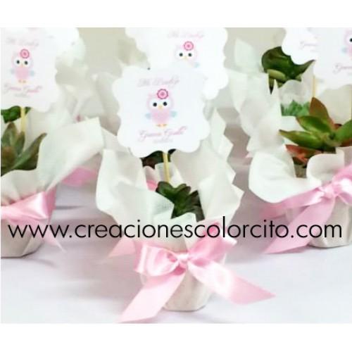 Suculentas (rosado)