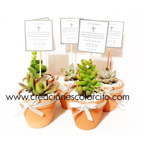 Suculentas - Cactus